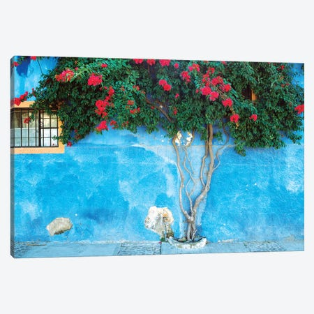 Mexico, Ajijic. Bougainvillea against wall.  Canvas Print #JYG295} by Jaynes Gallery Art Print