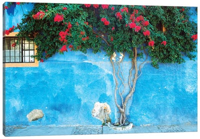 Mexico, Ajijic. Bougainvillea against wall.  Canvas Art Print