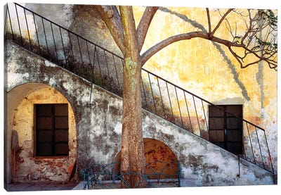 Mexico, Queretaro. Tree and weathered stairway.  Canvas Art Print
