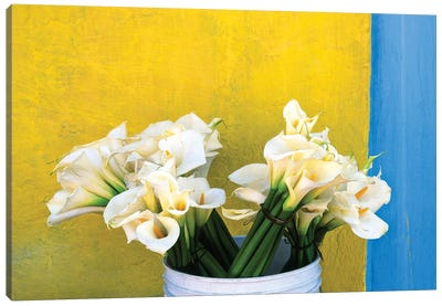 Mexico, Xico. Calla lilies and colorful wall.  Canvas Art Print