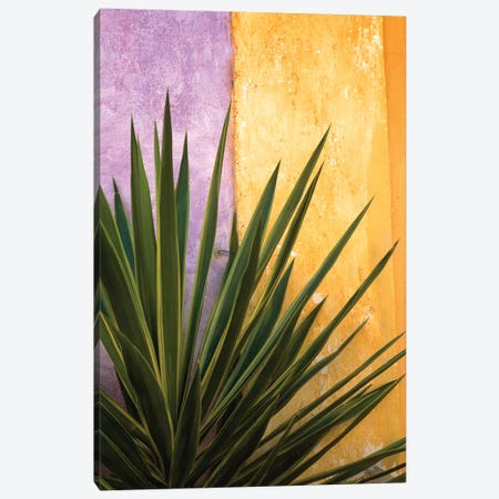 Mexico. Plant against colorful wall.  Canvas Print #JYG317} by Jaynes Gallery Canvas Wall Art