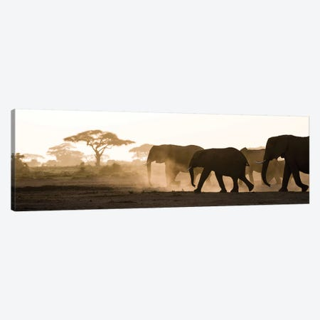 Africa, Kenya, Amboseli National Park. Backlit elephants on the march. Canvas Print #JYG339} by Jaynes Gallery Canvas Print