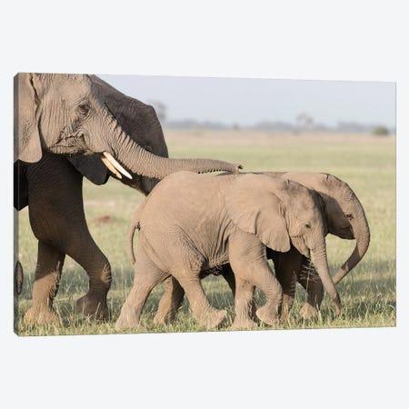 Africa, Kenya, Amboseli National Park. Close-up of elephants walking. 3-Piece Canvas #JYG340} by Jaynes Gallery Canvas Wall Art