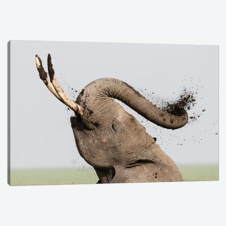Africa, Kenya, Amboseli National Park. Elephant spraying mud sunscreen. Canvas Print #JYG344} by Jaynes Gallery Canvas Art Print
