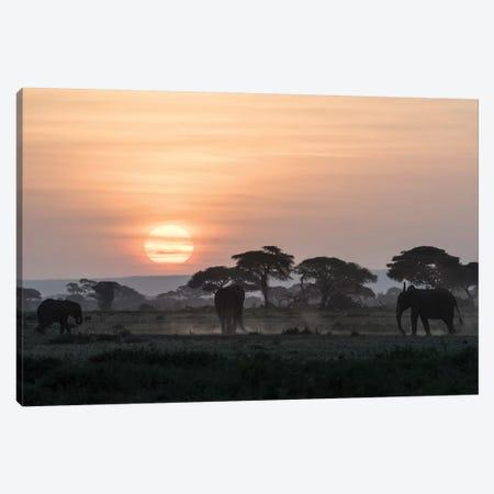 Africa, Kenya, Amboseli National Park. Elephants and umbrella thorn acacia trees. Canvas Print #JYG346} by Jaynes Gallery Art Print