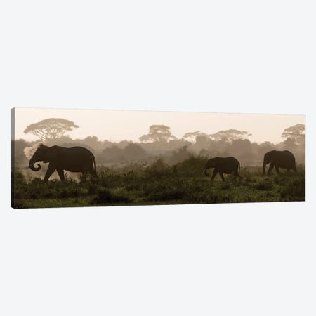 Africa, Kenya, Amboseli National Park. Elephants backlit at sunset. Canvas Print #JYG348} by Jaynes Gallery Canvas Wall Art