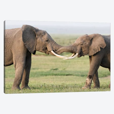 Africa, Kenya, Amboseli National Park. Elephants greeting. Canvas Print #JYG349} by Jaynes Gallery Canvas Art
