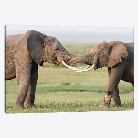 Africa, Kenya, Amboseli National Park. Elephants greeting. 3-Piece Canvas #JYG349} by Jaynes Gallery Canvas Art
