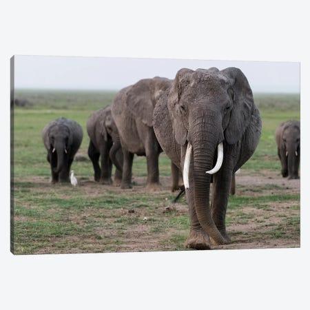 Africa, Kenya, Amboseli National Park. Elephants on the march. 3-Piece Canvas #JYG350} by Jaynes Gallery Canvas Print