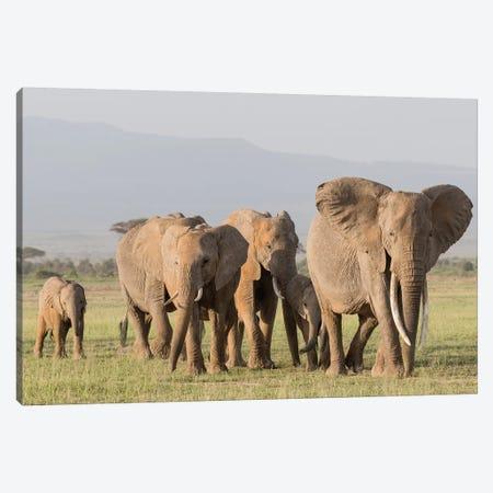 Africa, Kenya, Amboseli National Park. Elephants on the march. 3-Piece Canvas #JYG351} by Jaynes Gallery Art Print