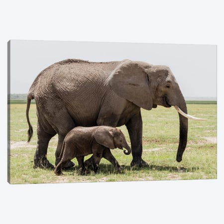 Africa, Kenya, Amboseli National Park. Mother elephant and baby walking. 3-Piece Canvas #JYG352} by Jaynes Gallery Canvas Print