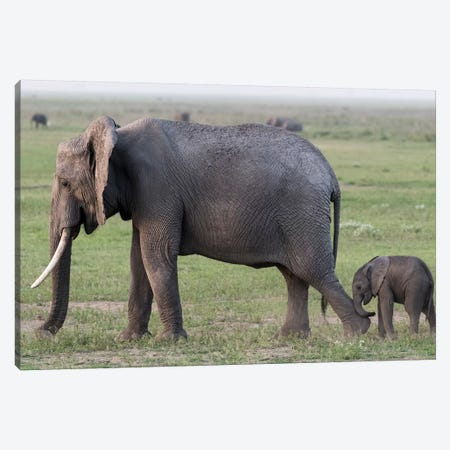 Africa, Kenya, Amboseli National Park. Mother elephant and baby walking. Canvas Print #JYG353} by Jaynes Gallery Canvas Art Print