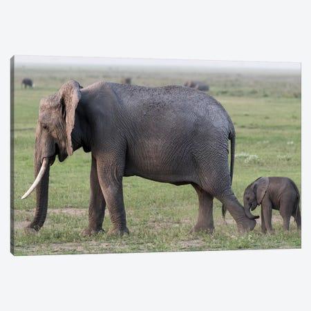 Africa, Kenya, Amboseli National Park. Mother elephant and baby walking. Canvas Print #JYG353} by Jaynes Gallery Canvas Art Print