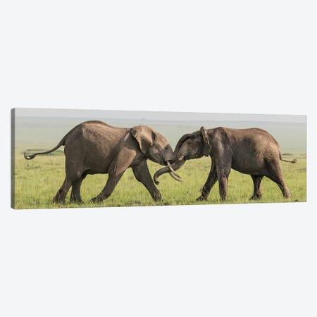 Africa, Kenya, Maasai Mara National Reserve. Elephants greeting. Canvas Print #JYG361} by Jaynes Gallery Canvas Art