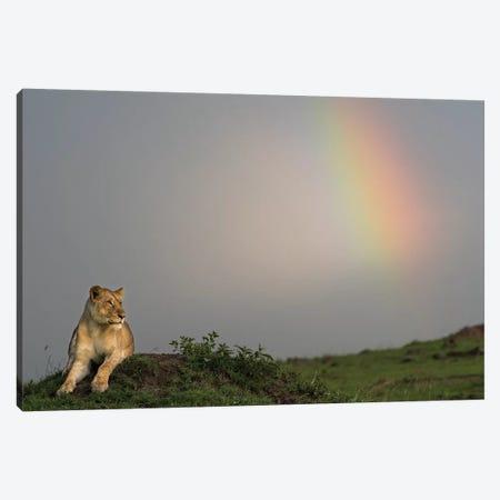 Africa, Kenya, Maasai Mara National Reserve. Female lion and rainbow. Canvas Print #JYG362} by Jaynes Gallery Canvas Wall Art