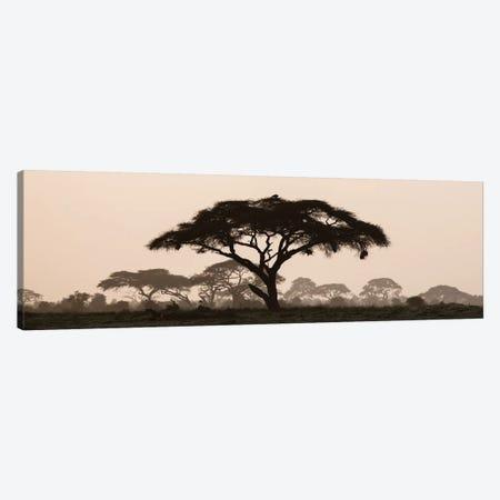 Africa, Kenya, Maasai Mara National Reserve. Silhouette of umbrella thorn acacia tree at sunset. Canvas Print #JYG372} by Jaynes Gallery Canvas Print
