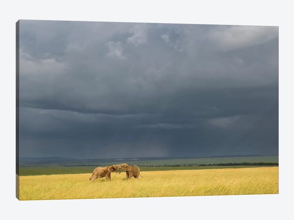 Africa, Kenya, Maasai Mara National Reserve. Storm clouds over elephants at sunset. by Jaynes Gallery 1-piece Canvas Print