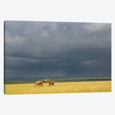 Africa, Kenya, Maasai Mara National Reserve. Storm clouds over elephants at sunset. Canvas Print #JYG374} by Jaynes Gallery Canvas Wall Art