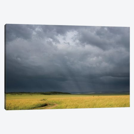 Africa, Kenya, Maasai Mara National Reserve. Storm clouds over savannah at sunset. Canvas Print #JYG375} by Jaynes Gallery Canvas Artwork