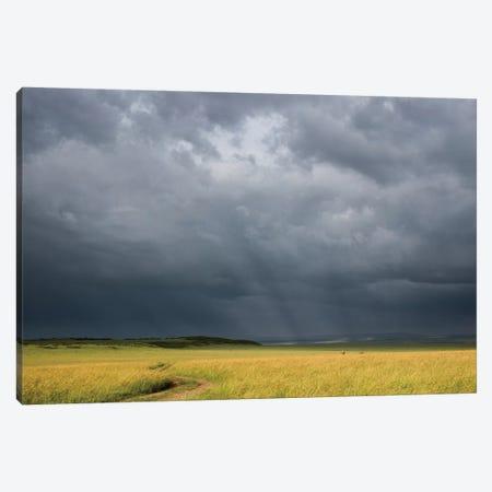 Africa, Kenya, Maasai Mara National Reserve. Storm clouds over savannah at sunset. Canvas Print #JYG375} by Jaynes Gallery Canvas Artwork