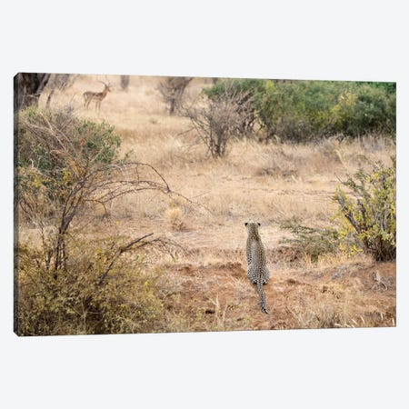 Africa, Kenya. Leopard eying antelope. 3-Piece Canvas #JYG383} by Jaynes Gallery Canvas Wall Art