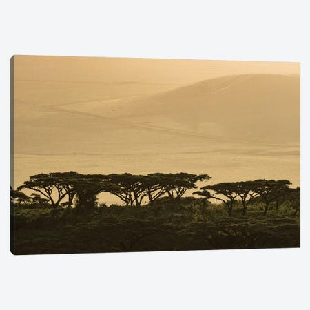 Africa, Tanzania, Ngorongoro Conservation Area. Highlands trees in shade. 3-Piece Canvas #JYG392} by Jaynes Gallery Canvas Art Print