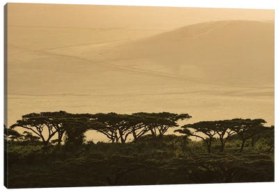 Africa, Tanzania, Ngorongoro Conservation Area. Highlands trees in shade. Canvas Art Print