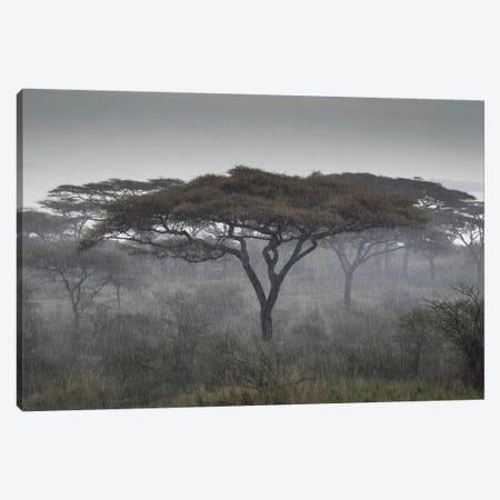 Africa, Tanzania, Ngorongoro Conservation Area. Rain and trees on savannah. 3-Piece Canvas #JYG394} by Jaynes Gallery Canvas Wall Art