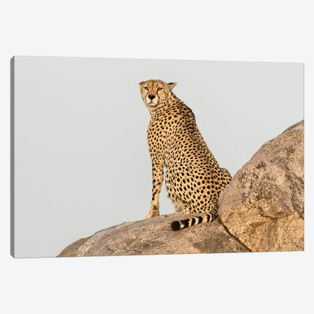 Africa, Tanzania, Serengeti National Park. Close-up of cheetah on boulder. Canvas Print #JYG396} by Jaynes Gallery Canvas Artwork