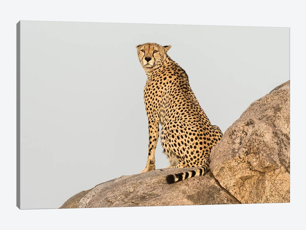 Africa, Tanzania, Serengeti National Park. Close-up of cheetah on boulder. by Jaynes Gallery 1-piece Canvas Print