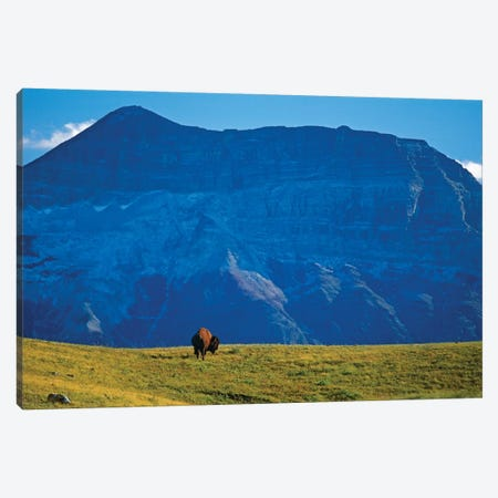 Canada, Alberta, Waterton National Park. Bison and Sofa Mountain. Canvas Print #JYG407} by Jaynes Gallery Canvas Art