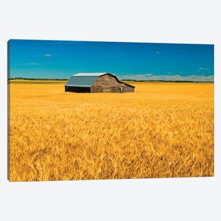 Canada, Manitoba, Holland. Barn and wheat field. Canvas Print #JYG423} by Jaynes Gallery Canvas Print