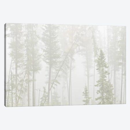 Canada, Ontario, Ear Falls. Forest in fog. Canvas Print #JYG457} by Jaynes Gallery Art Print
