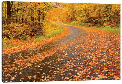 Canada, Ontario, Goulasi River. Country road lined with fallen maple leaves. Canvas Art Print