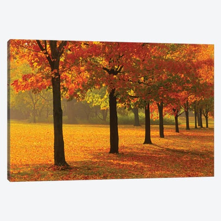 Canada, Ontario, Guelph. Sugar maple trees in autumn. Canvas Print #JYG461} by Jaynes Gallery Art Print