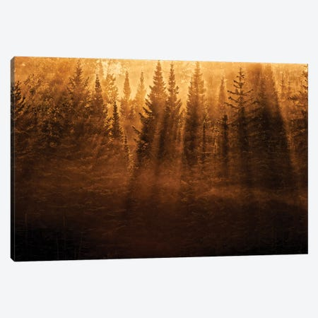 Canada, Ontario, Kenora. Backlit tree shadows at sunrise. Canvas Print #JYG462} by Jaynes Gallery Canvas Art Print