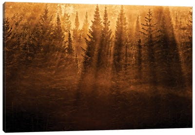 Canada, Ontario, Kenora. Backlit tree shadows at sunrise. Canvas Art Print