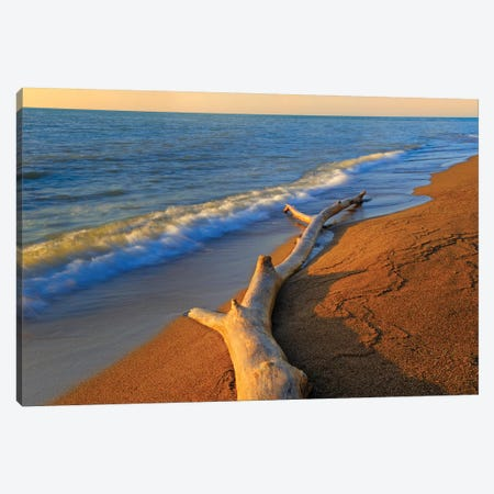 Canada, Ontario, Point Pelee National Park. Driftwood on Lake Erie shore. Canvas Print #JYG466} by Jaynes Gallery Canvas Artwork