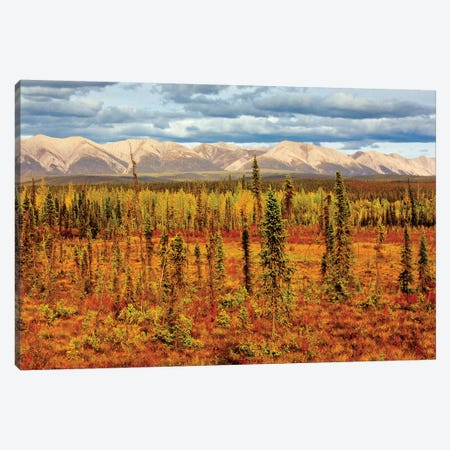 Canada, Yukon. Sub-Arctic vegetation. Canvas Print #JYG502} by Jaynes Gallery Canvas Wall Art