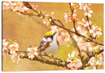 Canada. Chestnut-sided warbler bird in tree. Canvas Art Print