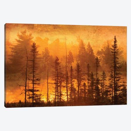 Canada. Trees in morning fog. Canvas Print #JYG511} by Jaynes Gallery Art Print