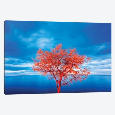 Croatia, Rovinj. tree at blue hour  Canvas Print #JYG547} by Jaynes Gallery Art Print