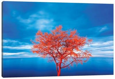 Croatia, Rovinj. tree at blue hour  Canvas Art Print