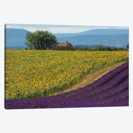 France, Provence. Lavender field in the Valensole Plateau.  Canvas Print #JYG551} by Jaynes Gallery Canvas Print