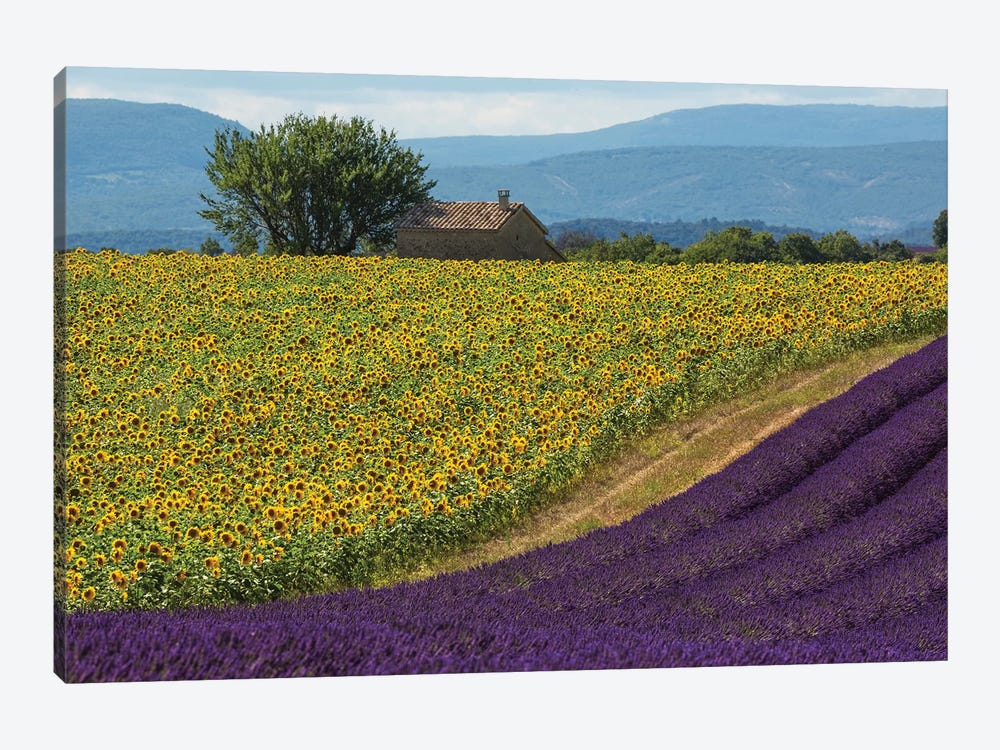 France, Provence. Lavender field in the Valensole Plateau.  by Jaynes Gallery 1-piece Canvas Wall Art