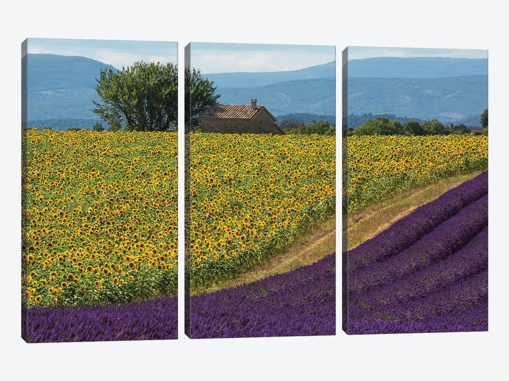 France, Provence. Lavender field in the Valensole Plateau.  by Jaynes Gallery 3-piece Canvas Artwork