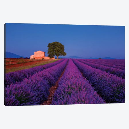 France, Provence. Lavender field in the Valensole Plateau.  Canvas Print #JYG552} by Jaynes Gallery Art Print