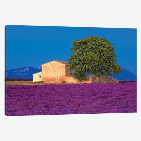France, Provence. Lavender field in the Valensole Plateau.  Canvas Print #JYG553} by Jaynes Gallery Canvas Art Print