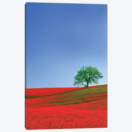 Italy, Tuscany. Abstract of oak tree on red flower-covered hillside I Canvas Print #JYG55} by Jaynes Gallery Canvas Artwork