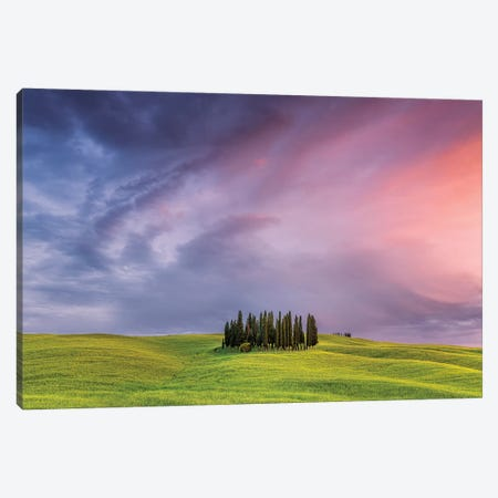 Italy, San Quirico d'Orcia. Cypress grove at sunset.  Canvas Print #JYG568} by Jaynes Gallery Canvas Wall Art